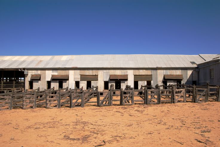 Whitehaven Station shearing shed