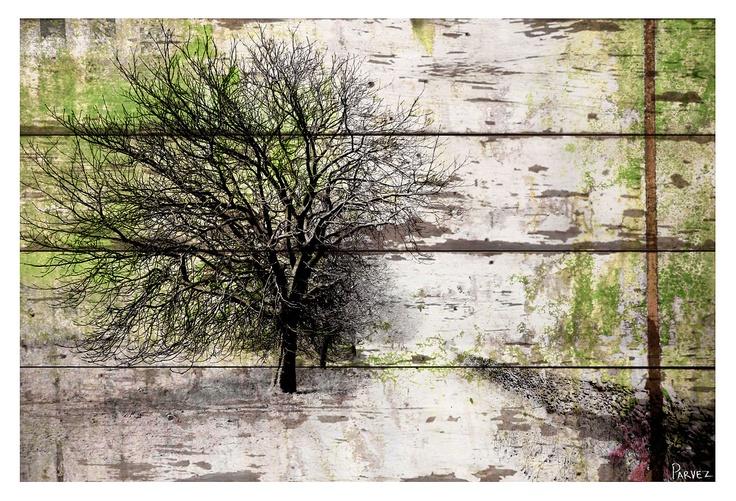 Parvez Taj  Yosemite print on reclaimed barn wood