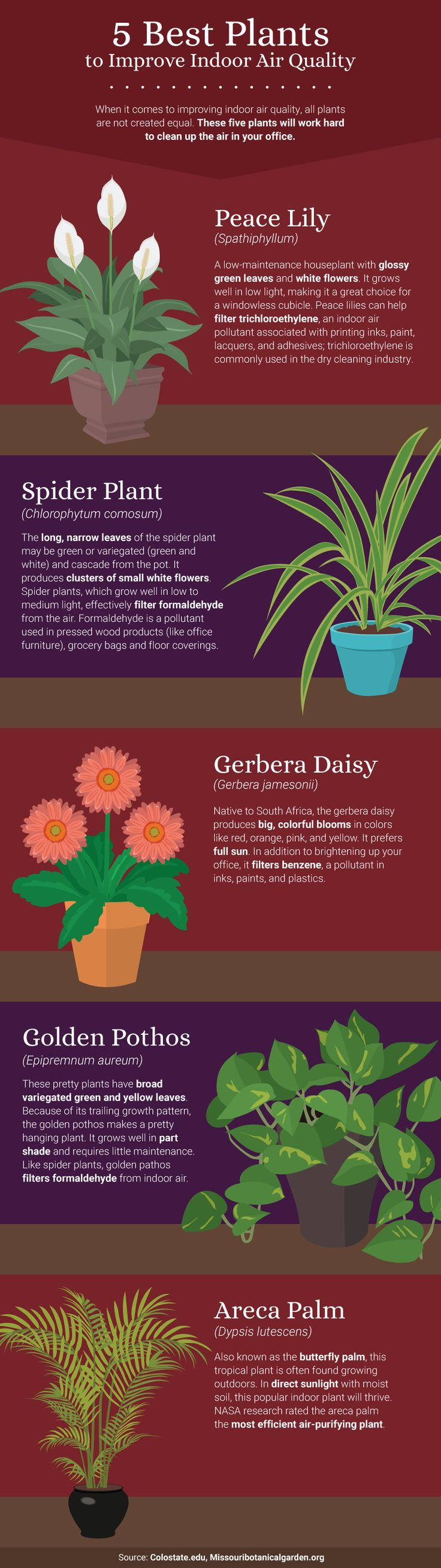 5 Best Office Plants For Air Quality   The Benefits Of Office Plants