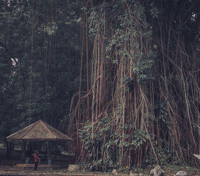 Life too short to spend alone - Christian Simamora. . In frame : @urmilamile . 📍Bogor Botanical Garden. 🎤 Jason Richardson and Luke Holland - Omni. . #visitbogor #explorebogor #folkgreen #livefolkindonesia #exploreindonesia #pesonaindonesia #instanusantara #indonesiantraveler #kerengan #discoverindonesia #mainsebentar #instasunda #lingkarindonesia #ayodolan #wonderfulindonesia #indoflashlight #enjoyindonesia #indonesiaparadise #parapejalan #journesia #indotravellers #parapejalan #kerenesia…