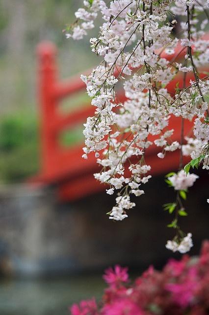 幻想桥 Dream Bridge by randomix, via Flickr - Sakura Garden, East Lake, Wuhan, China