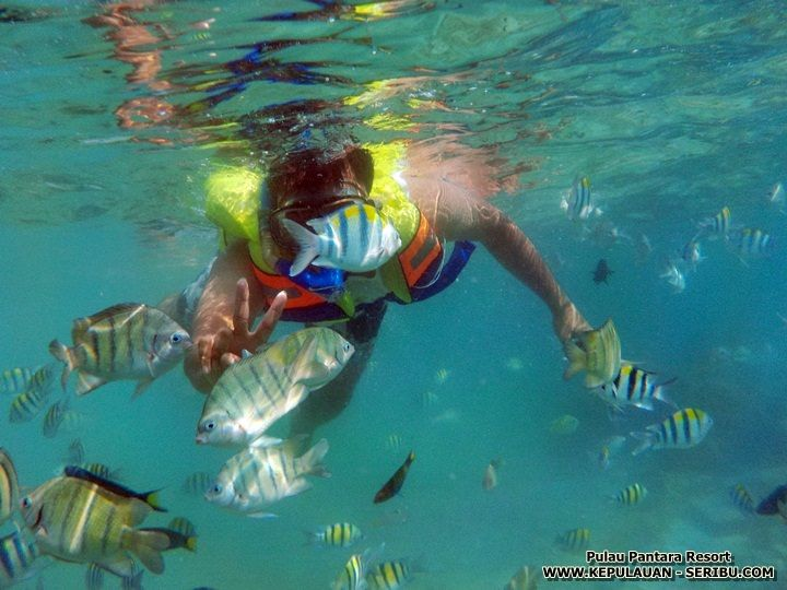 Snorkeling Pulau Pantara
