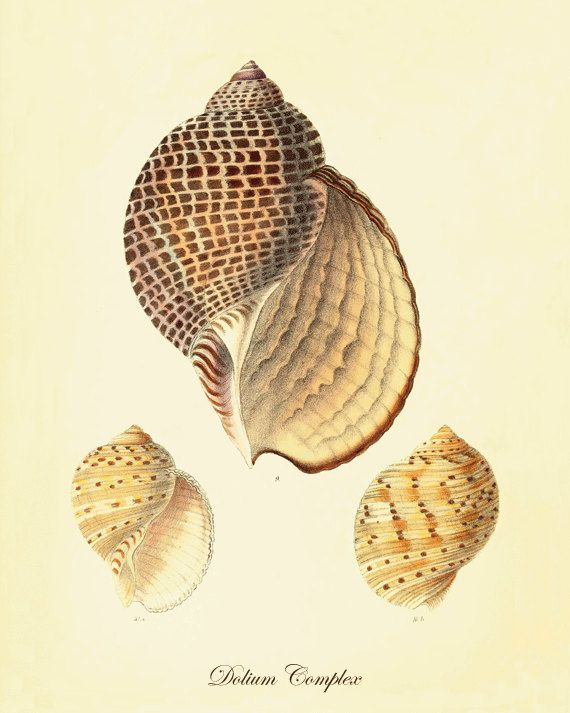 Sea shell art print Beach decor art Sea beach by VictorianWallArt