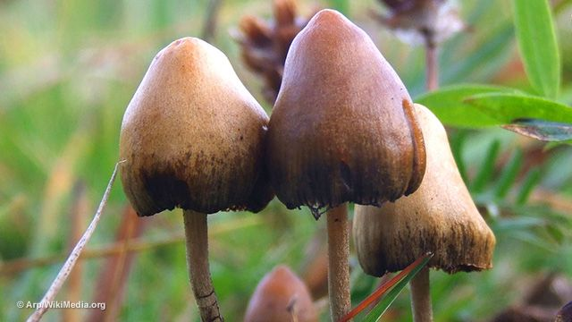 Magic mushrooms found to be powerful medicine that CURES depression with a single treatment ... No wonder they're kept illegal by the government!