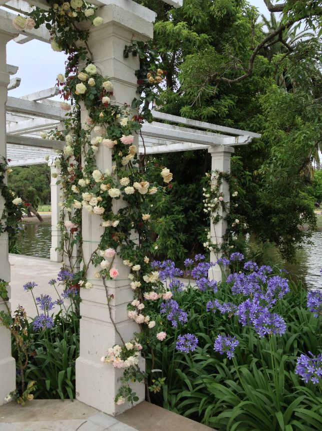 El Rosedal de #Palermo. #BuenosAires. garden arbor with roses and agapanthus