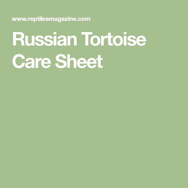 Russian Tortoise Care Sheet