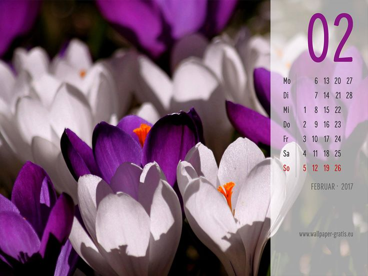 Februar - Kalender 2017 - Blumen