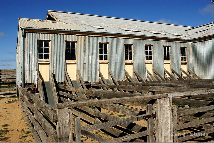 Shearing shed at Hay by Darren Stones