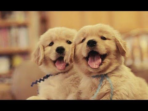 """Click visit site and Check out Best Your TShirts. This website is top-notch. Tip: You can search """"your last name"""" or """"your favorite shirts"""" at search bar on the top. #puppies #puppy"""