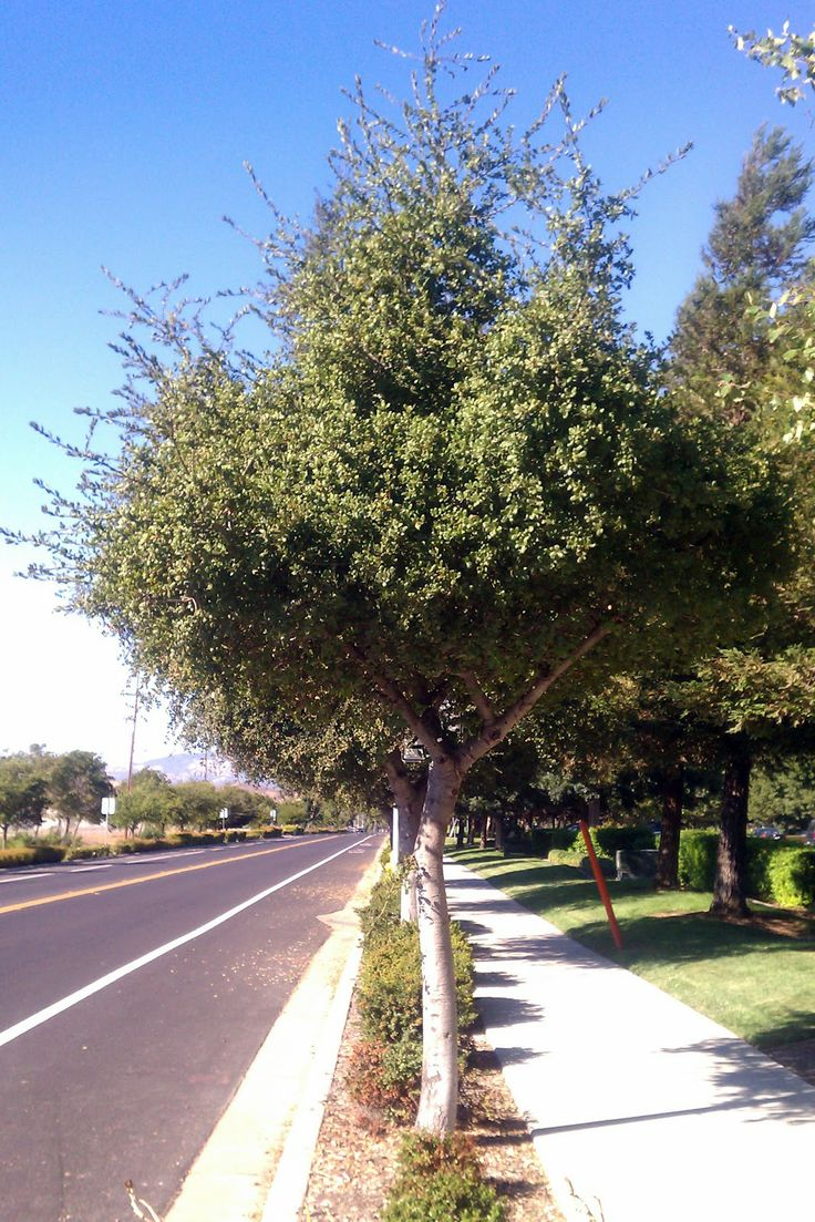 208 best ca native landscaping ideas images on Pinterest ...