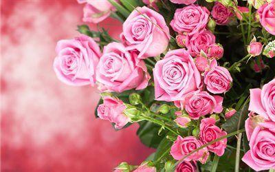 Scarica sfondi bouquet gratuito, fiori, rose, rose rosa, bellissimi fiori, un mazzo di rose