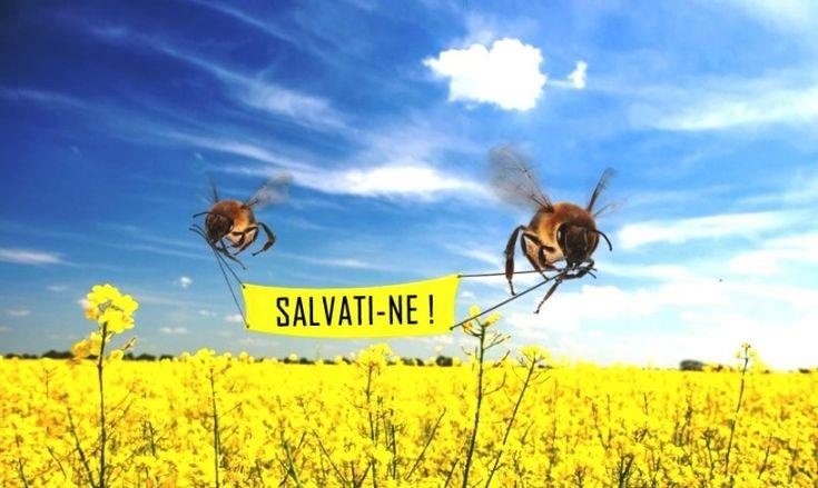 salvati albinele
