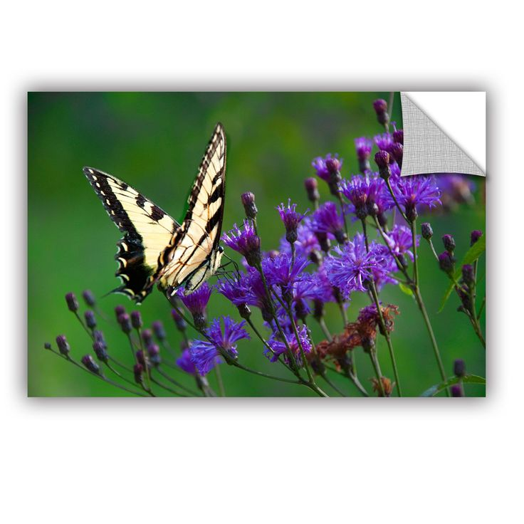 Butterfly on Ironweed by Julie Mann Sperry Wall Mural