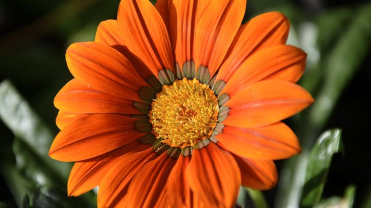 Beautiful Nature Wallpaper with Orange Color Single Flower