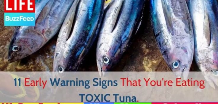 Home Remedies: 11 Early Warning Signs Mercury Poisoning From Eating TOXIC Tuna | Health Care Tips http://homeremediestv.com/home-remedies-11-early-warning-signs-mercury-poisoning-from-eating-toxic-tuna-health-care-tips/ #HealthCare #HomeRemedies #HealthTips #Remedies #NatureCures #Health #NaturalRemedies  http://HomeRemediesTV.com/Best-Supplements DO You Know That Youre Eating TOXIC Tuna? 11 Early Warning Signs you getting mercury poisoning from   Related Post  Put A Bar Of Soap Under Your…