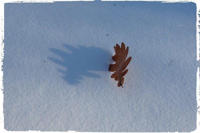 Winter Poetry. #poetry #freeimages #freepictures #freephotos #haiku #winter #minimal #minimalism