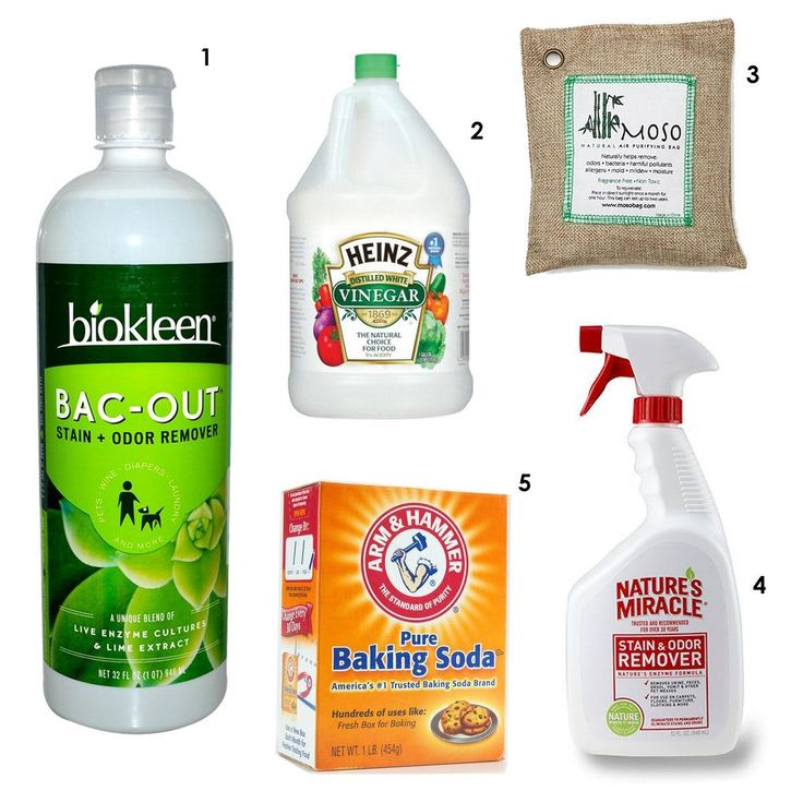 Rethink the Stink: 5 Odor Removing Products No Home Should Be Without — Apartment Therapy's Home Remedies