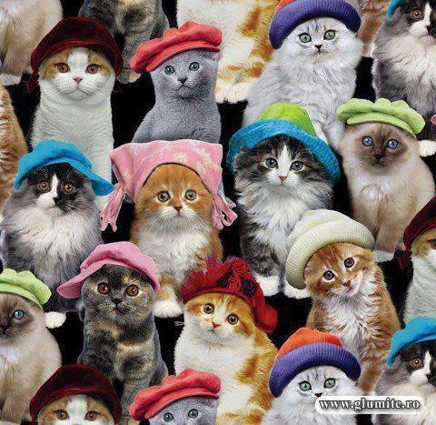 Poze Animale-Pregatite de iarna Bancuri glume poze - Glumite.ro