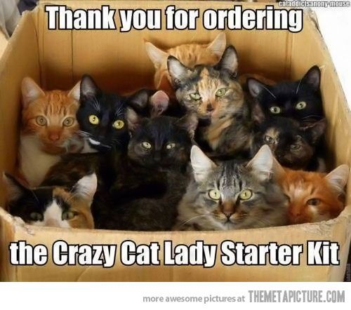 Crazy Cats, Lady Starters, Catlady, Starters Kits, Funny Stuff, Too Funny, Crazy Cat Lady, Kitty, Animal