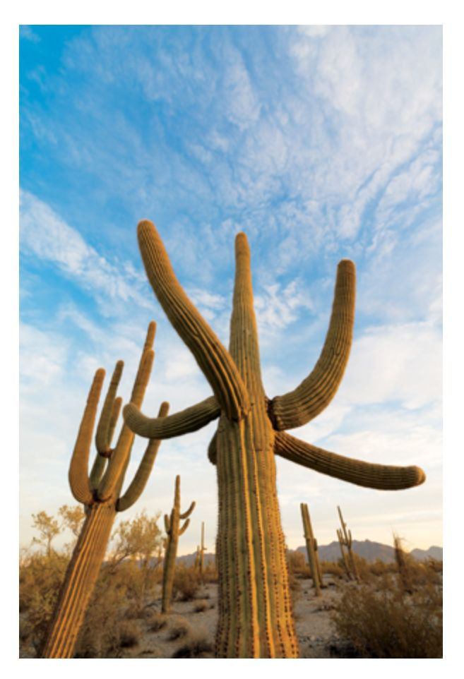 line, depth, colors, cactus