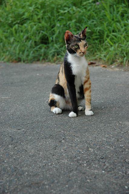 Amazing Markings on a black white orange striped mixed cat