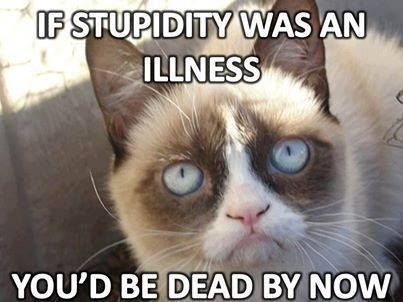 Grumpy cat quotes, funny grumpy cat, grumpy cat meme, grumpy cat funny, grumpy cat jokes …For the best humor and funny memes visit www.bestfunnyjokes4u.com/rofl-funny-pic-of-the-day-8/