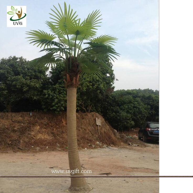 UVG PTR038 eco friendly decorative outdoor fake palm trees for sale; Contact Person: Janice Jiang Mobile : 0086 132 6684 7319 E-mail: sales@uvgift.com Skype: uvgdecor Whatsapp:  0086 13266847319   UVG Homepage:    http://www.uvgift.com    ------------------------------------------------------------------------------------------------------- UVG Technology Co.Ltd