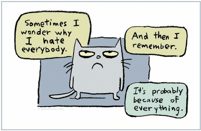 Why I hate everybody.: Cats, Giggle, Hate, Quotes, Sometimes I Wonder, Funny Stuff, Funnies, Humor