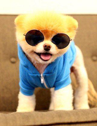 Boo the dog so cute