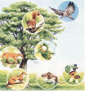 Isten tenyerén 2.: Az élet körforgása az erdőben