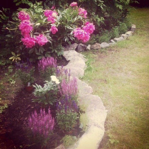 Juli - Nyplanterade pioner och andra blommor