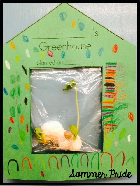 "Greenhouses. Ziplock bag, wet cotton balls and seeds. You can see all the plant parts. This has a printable for the ""house"". Although I think I might just tape the bags to the window and have a lot of them."