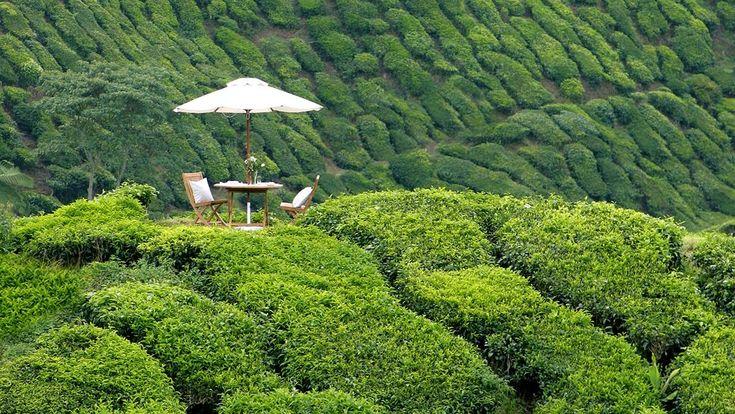 Cameron Highlands Resort, Pahang, M