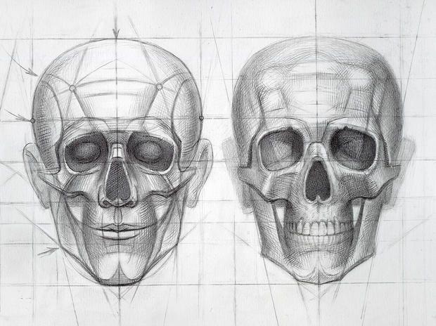 Human skull drawing - Top General Review - kReview top Reviews