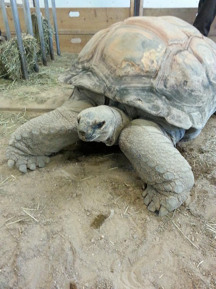 See one of the first endangered species at the Albuquerque Zoo. Read more at http://Facebook.com/ThornburgFunds