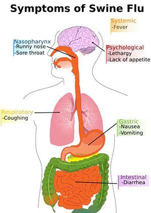 Ayurveda Treatment for Swine Flu   AyurLeaf Herbals