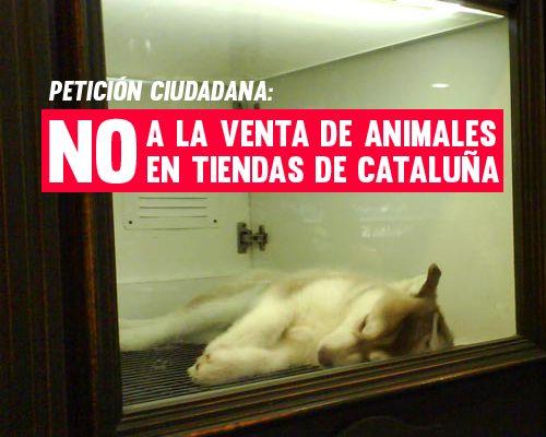 ADHERIROS, COMPARTIR Y DIFUNDIR AL MAXIMO  *Puedes traducir la web a múltiples idiomas   Una petición ciudadana pide el fin de la venta de animales y la reconversión de las tiendas en centros de adopción. Por supuesto apoyamos esta buena idea ¿Te apuntas?