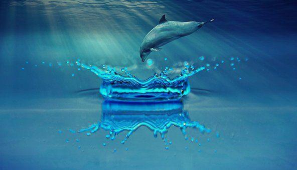 Delfín, Animales, Mamíferos Marinos