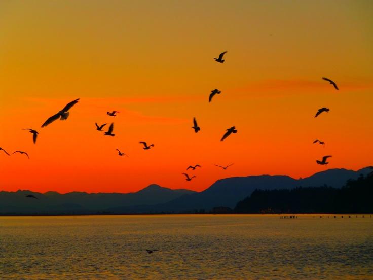 Fabulous Point Roberts Sunset