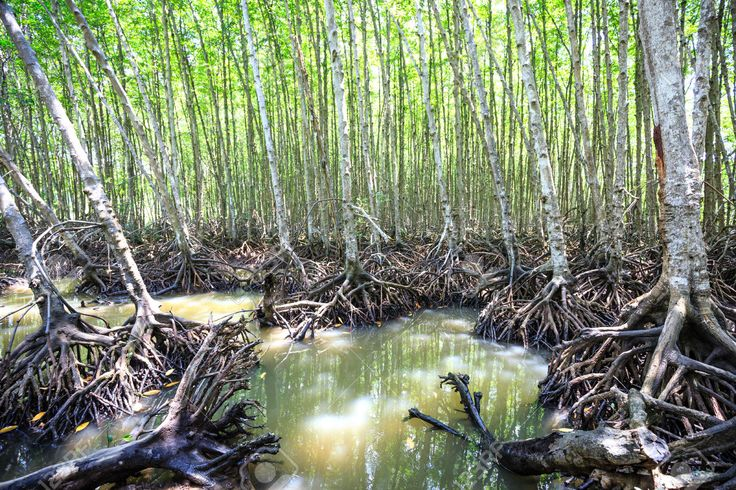 Mangroves-forest-in-Can-Gio-Ho-Chi-Minh-City-Vietnam