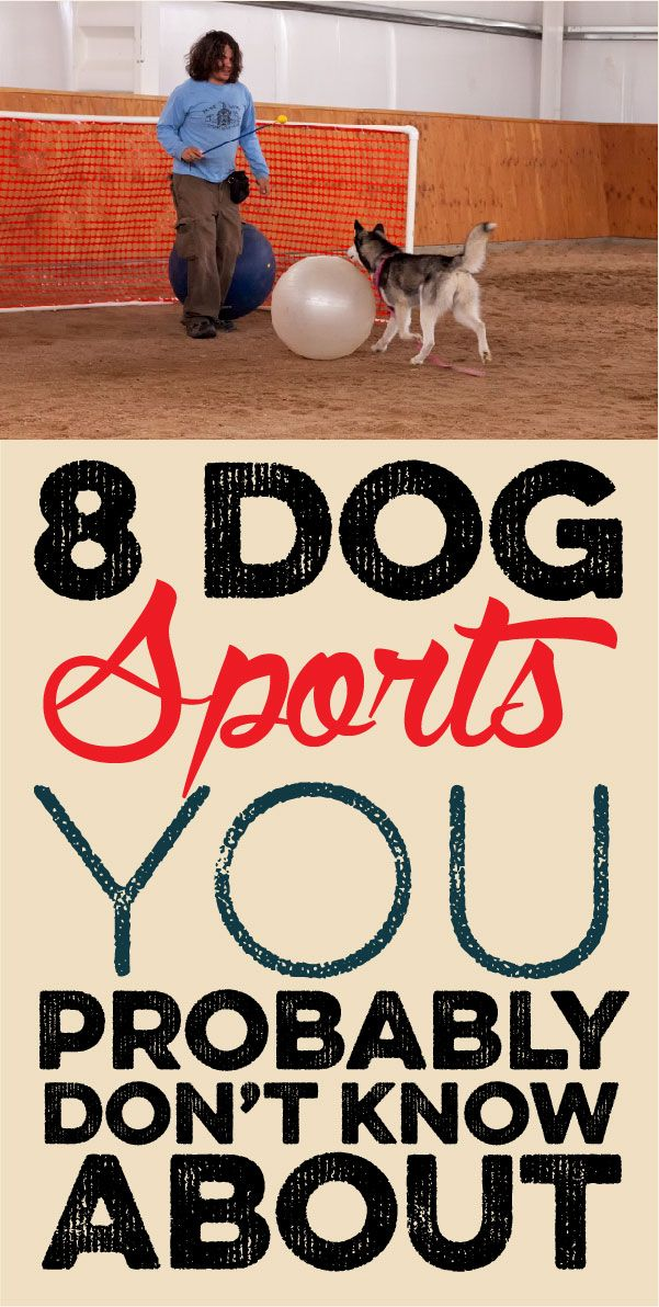 8 dog sports you probably don't even know about…
