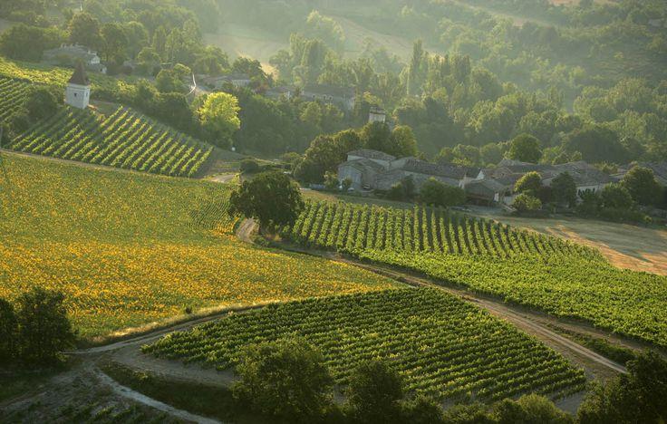 Vignes de Gaillac (Tarn) - Par CRT Midi-Pyrénées / Dominique VIET #TourismeMidiPy #MidiPyrenees #France #wine