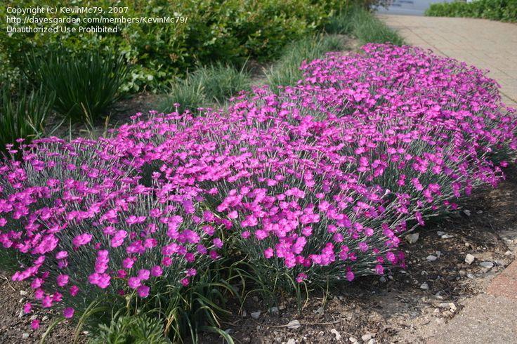 800 533 backyard landscaping pinterest for Hardy flowering trees