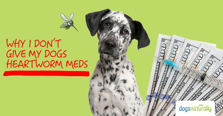 Yes, you can prevent heartworm in dogs without harmful meds. We'll show you how to safely replace those harmful meds with this simple, inexpensive solution.
