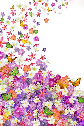8144 Flowers and Butterflies Backdrop