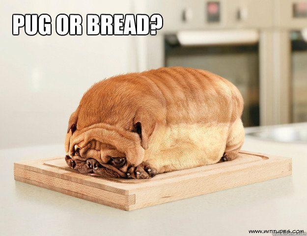 Pug or Bread?