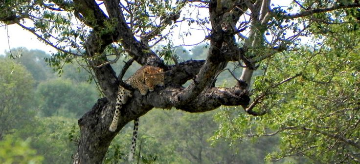 Game Reserves, Luxury Lodges, Southern African Safaris