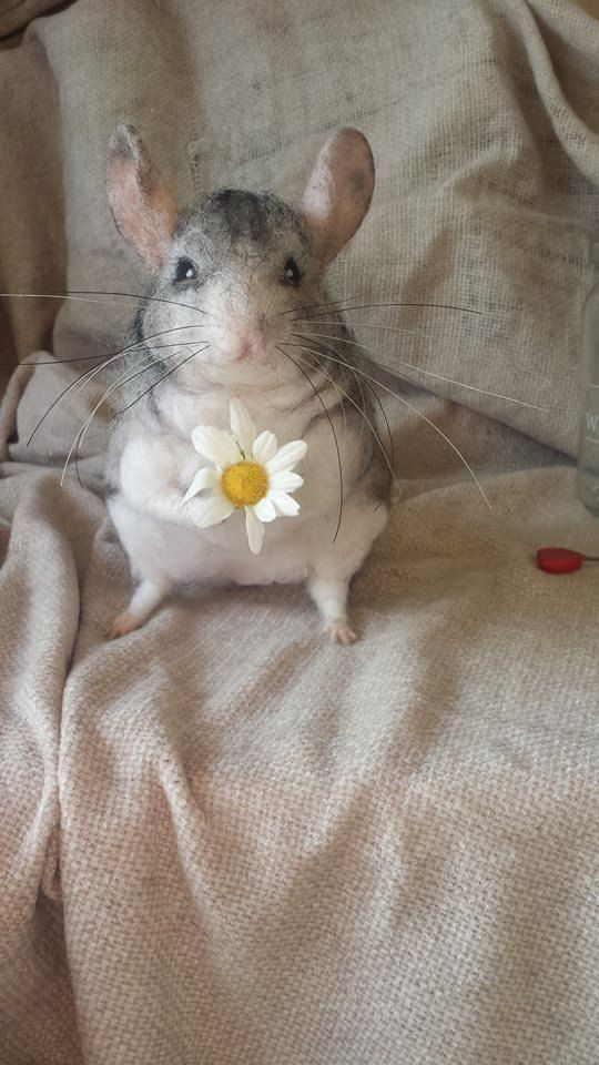 149 best images about Chinchilla on Pinterest | Search, Artwork ...