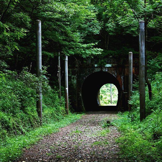友達が送ってきた写真。千と千尋みたい。どこにいるのー?? #千と千尋の神隠し #千尋 #ハク #ニギハヤミコハクヌシ #カオナシ #坊の声は神木くん #トンネル #トンネルの向こう側 #森 #つながり #ジブリ #ジブリ大好き #ジブリの森 #まっくろくろすけ #釜爺 #マイナスイオン #自然 #神様のおうち comhima 84