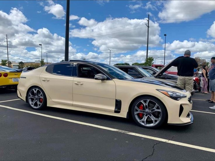 Simba the Stinger in 2020 Kia stinger, Kia, Bmw car